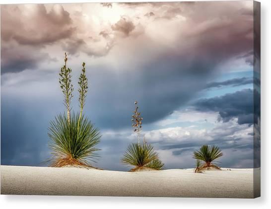 Yucca Three Canvas Print