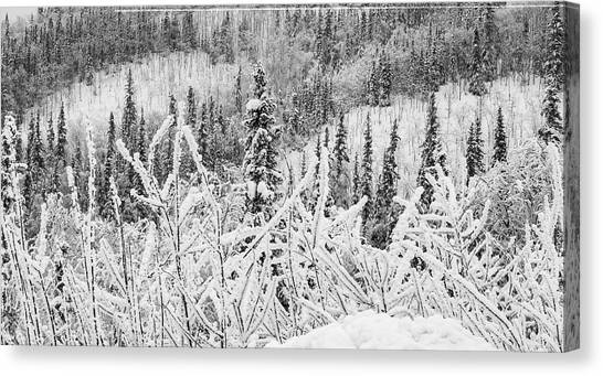 Canvas Print featuring the photograph Yukon Snow Scene Black And White Contrast by Phyllis Spoor