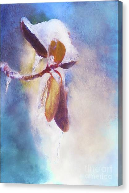 Winter Abstract - Snow And Ice On Rhododendron Leaves Canvas Print