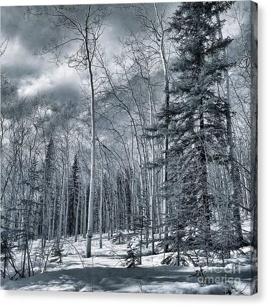 Tundras Canvas Print - Land Shapes 35 by Priska Wettstein
