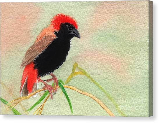Zanzibar Red Bishop Canvas Print