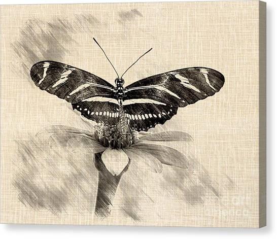 Zebra Butterfly Sketch Canvas Print