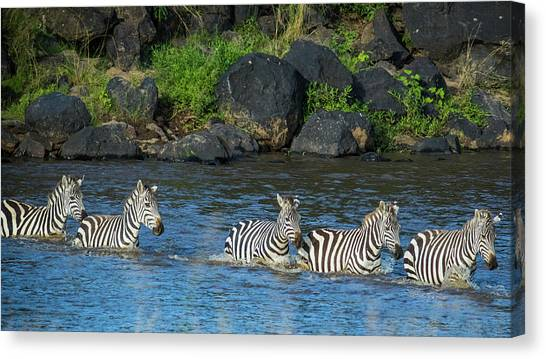 Leapords Canvas Print - Zebra Crossing by Subi Sridharan