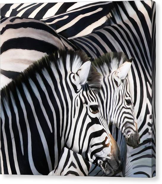 Zebra Family Canvas Print by Johnnie Boswell