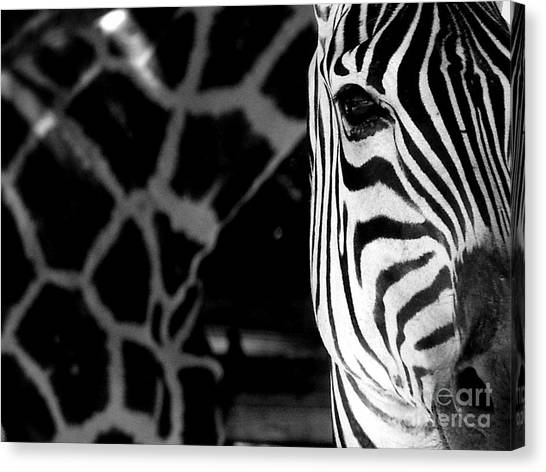 Zebra G Canvas Print by Tonya Laker