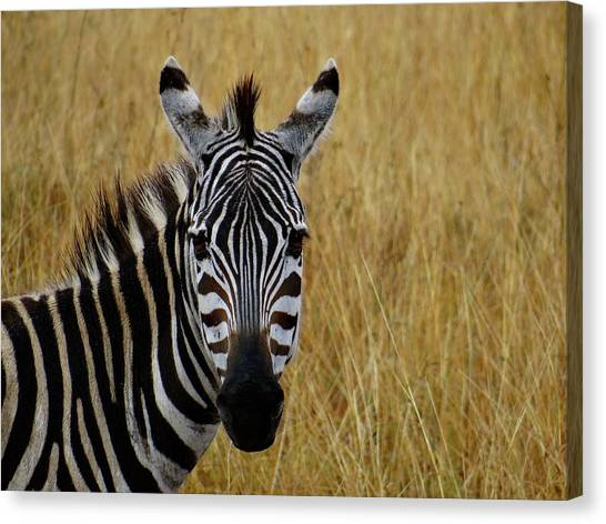Explorason Canvas Print - Zebra Half Shot Face On by Exploramum Exploramum