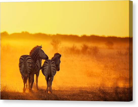 Zebras Canvas Print - Zebra In The Light by Ben Mcrae