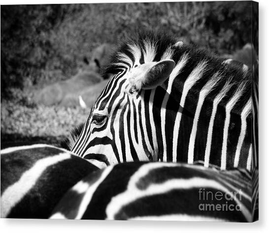 Zebra Incognito Canvas Print by Tonya Laker
