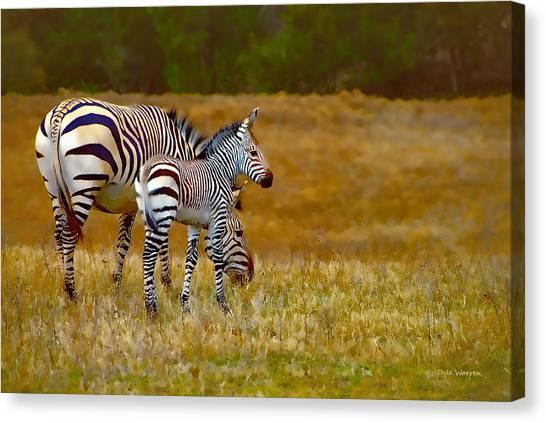 Zebra Mom And Foal Canvas Print