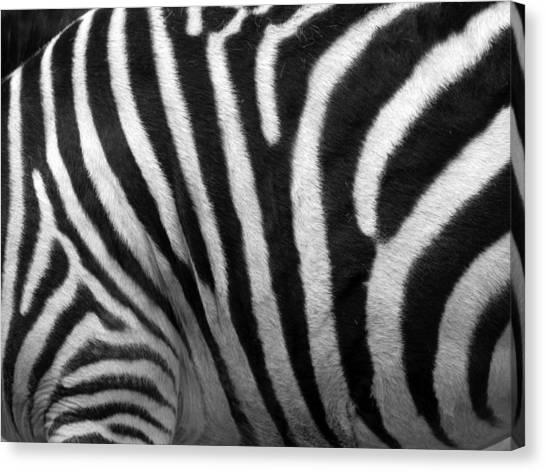 Zebra Stripes Canvas Print by George Jones