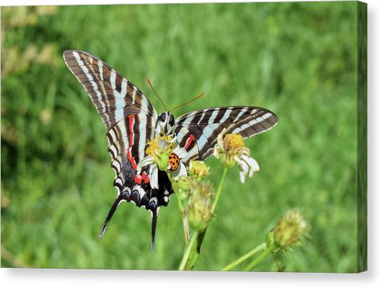 Zebra Swallowtail And Ladybug Canvas Print