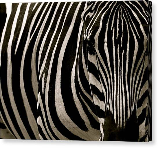 Zebra Up Close Canvas Print
