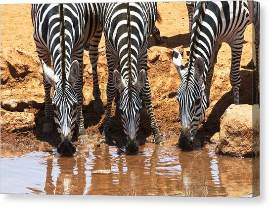 Zebras At The Watering Hole Canvas Print