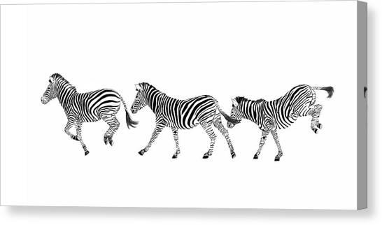 Zebras Dancing Canvas Print