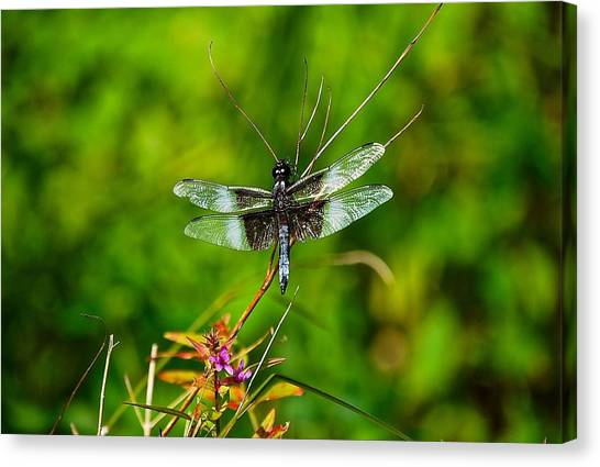 Zen Dragonfly 2 Canvas Print