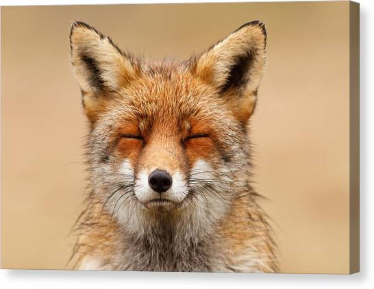 Red Eye Canvas Print - Zen Fox Red Fox Portrait by Roeselien Raimond
