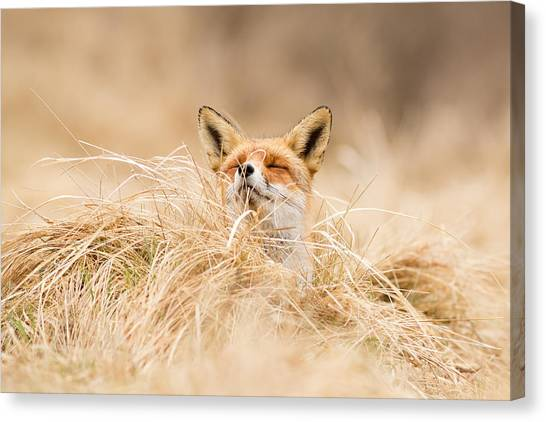 Fox Canvas Print - Zen Fox Series - Zen Fox 2.7 by Roeselien Raimond