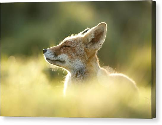 Fox Canvas Print - Zen Fox Series - Zen Fox Up Close by Roeselien Raimond