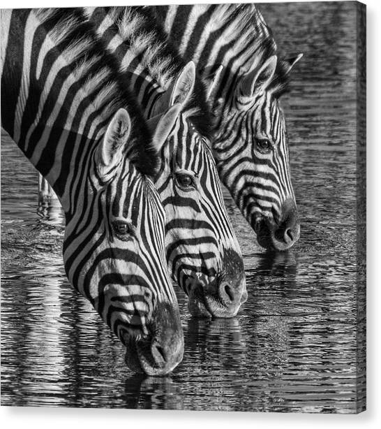 Canvas Print featuring the photograph Zerba At The Watering Hole by Rand