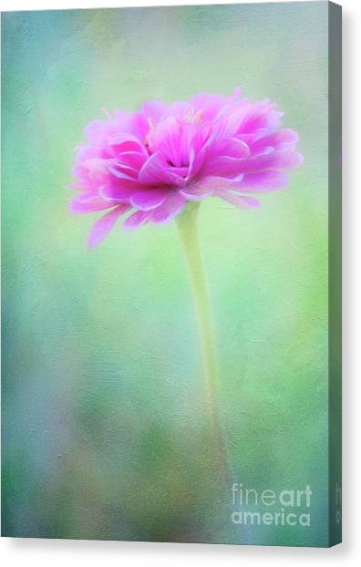 Painted Pink Zinnia Canvas Print