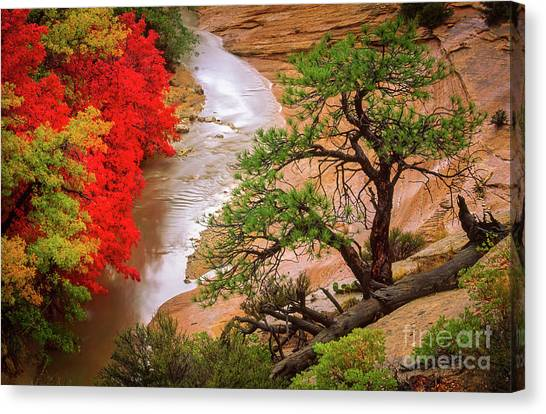 Flooding Canvas Print - Zion After The Flood by Inge Johnsson
