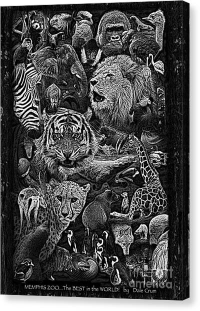 University Of Memphis Canvas Print - Zoo Collection 1 L Wd Bw by Dale Crum