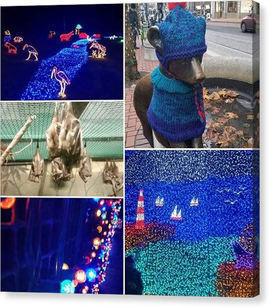 Bats Canvas Print - Zoolights And Walk Around Downtown! by Alison Wu