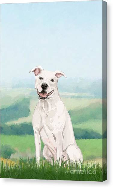 Purebred Canvas Print - American Staffordshire Terrier by John Edwards