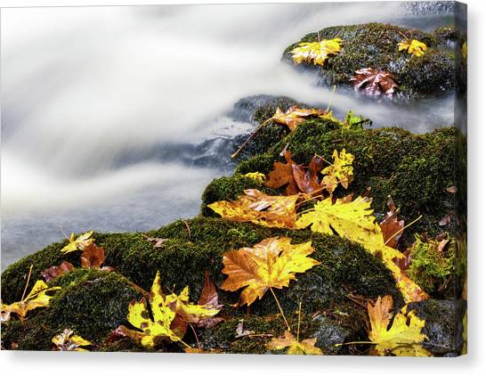Canvas Print featuring the photograph Autumn Creek by Nicole Young
