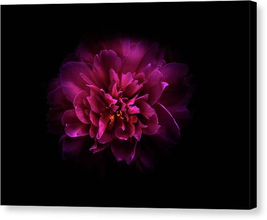 Canvas Print featuring the photograph Backyard Flowers 55 Color Version by Brian Carson