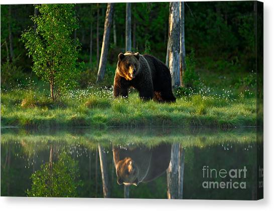 Big Canvas Print - Big Brown Bear Walking Around Lake In by Ondrej Prosicky