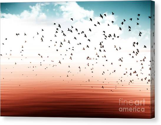 Connect Canvas Print - Birds Flying And Abstract Sky ,spring by Babaroga
