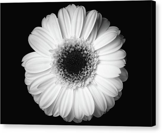 Canvas Print featuring the photograph Black And White Flower by Mirko Chessari