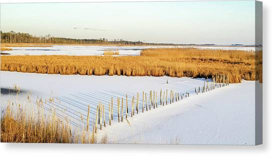 Blackwater National Wildlife Refuge Canvas Print