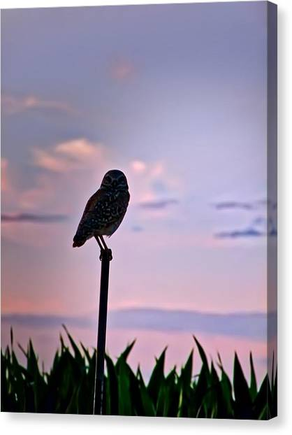 Burrowing Owl On A Stick Canvas Print