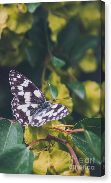 Yellow Butterfly Canvas Print - Butterfly, Flower, Colorful, Nature by Murgvi