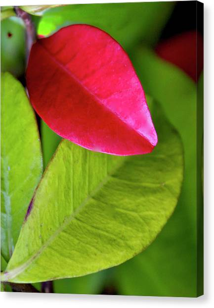 Colours. Red Canvas Print