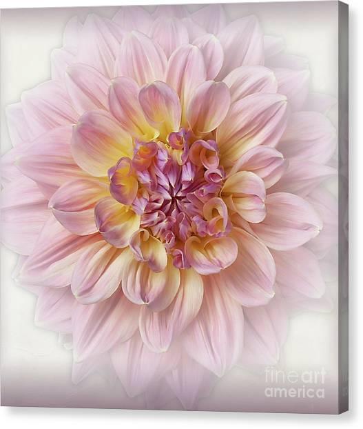 Canvas Print featuring the photograph Dahlia  by Ann Jacobson