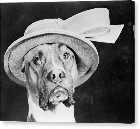 Doggy Hat Canvas Print by Keystone Features