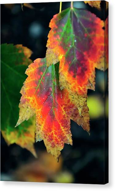 Canvas Print featuring the photograph Fall Leaves 6072 by Jerry Sodorff