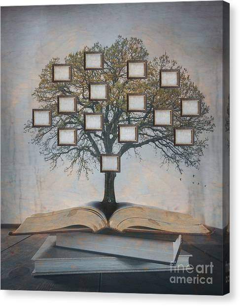 Connect Canvas Print - Family Tree, Genealogy by Suzanne Tucker