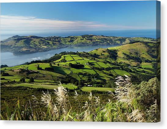 Farmland At Upper Junction, And Otago Canvas Print by David Wall