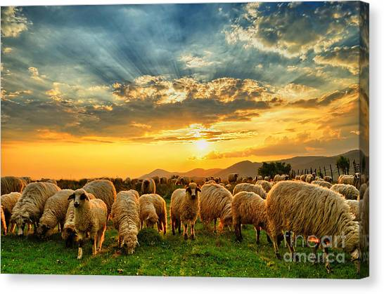 Farmland Canvas Print - Flock Of Sheep Grazing In A Hill At by Mihai tamasila