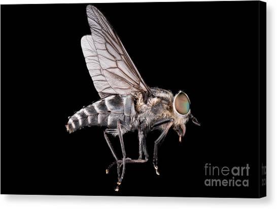 Urban Life Canvas Print - Fly Macro Insect Nature Animal Eye Bug by Murgvi