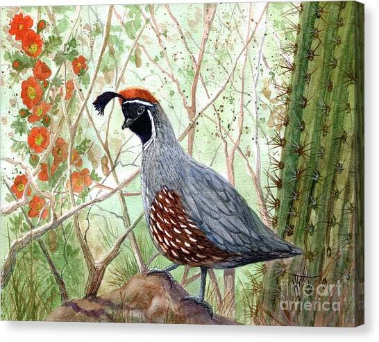 Canvas Print - Gambel's Quail by Marilyn Smith