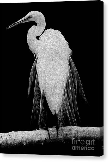 Great Egret In Full Bloom I Canvas Print