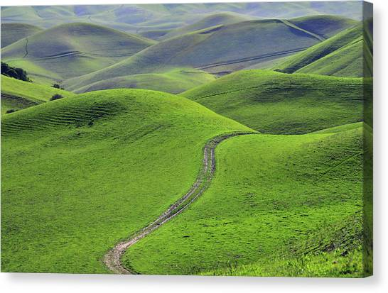 Green Hills With Road By Mitch Diamond
