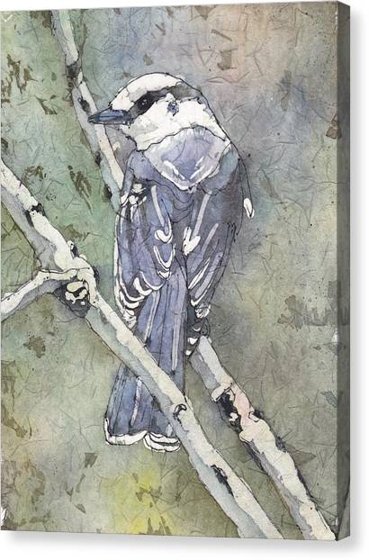 Grey Jay Canvas Print