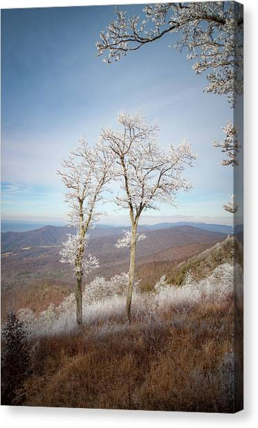 Hoarfrost Gathers Canvas Print