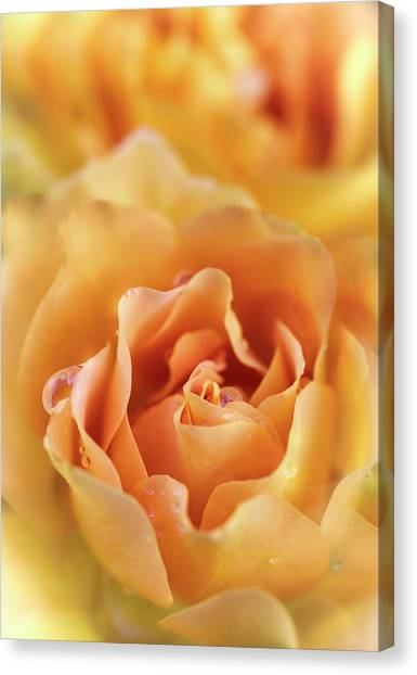 Canvas Print - Just Peachy  by Saija Lehtonen